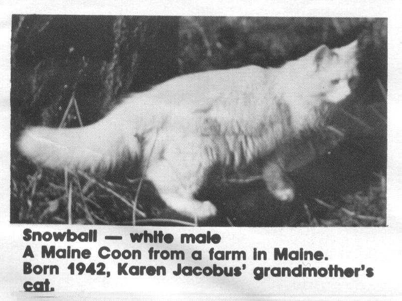 Een van de oorspronkelijke katten die later de Maine Coon werden.