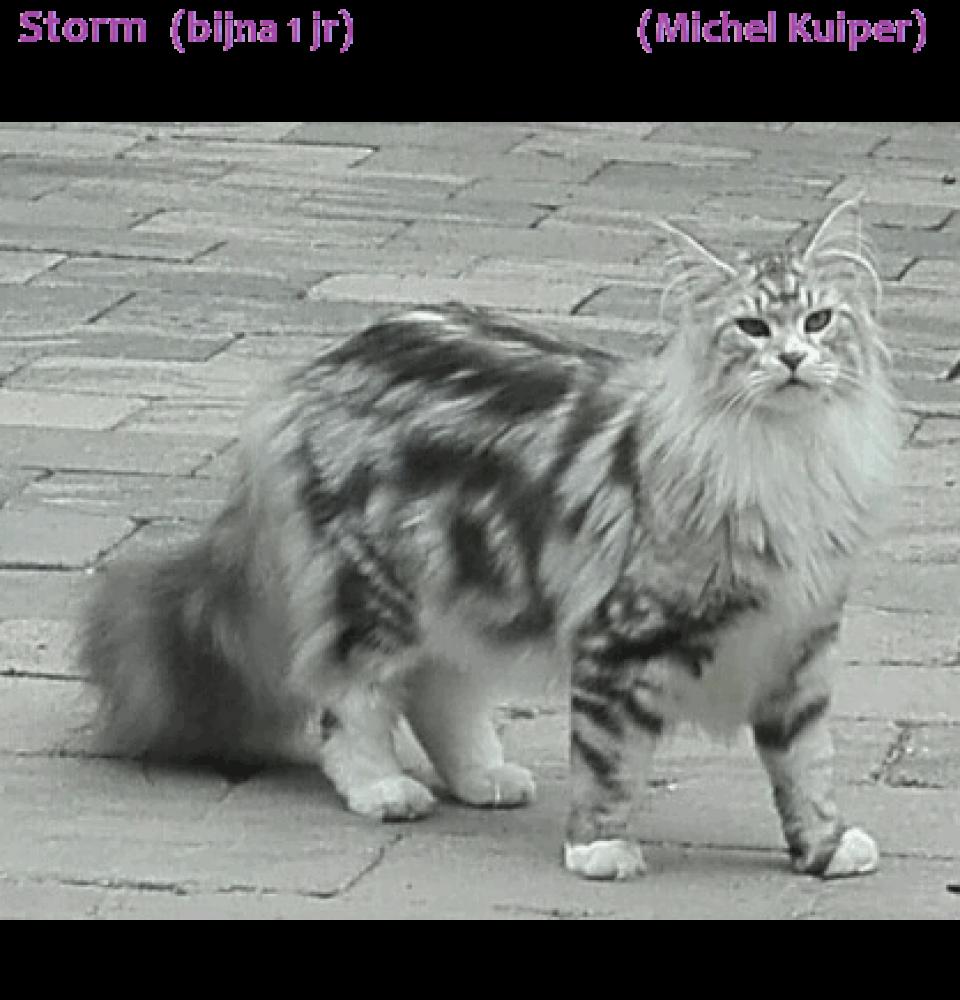michelkuiper20160908b